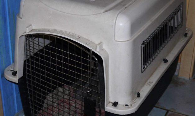 petmate hundebox transportbox